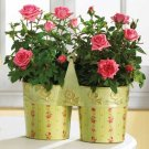 35627 Metal Roses Pots with Handle