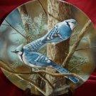Blue Jay Birds of Your Garden Kevin Daniels Plate