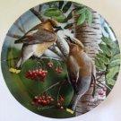 Cedar Waxwing Birds of Your Garden Collector Plate