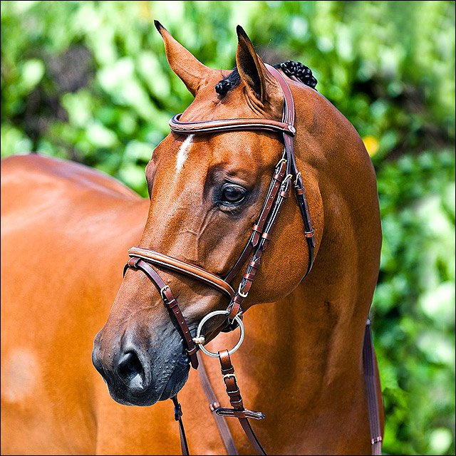 HORZE CONSTANCE PADDED FLASH HORSE LEATHER BRIDLE BROWN COB SIZE