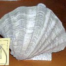 House Parts Hand Cast Clam Shell Statue Sculpture NEW
