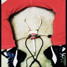 Red Legged Surgeon