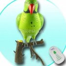 Recordable Parrot Wireless Doorbell New