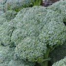Waltham  Heirloom Broccoli Seeds