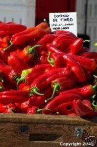 Corno di Toro Rosso Pepper Seeds-Imported-Italy