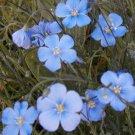 Wildflower Seed Bulk Mix-Sunny Area-17 Varieties! 4,500 Seeds!