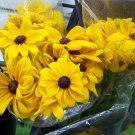 Black Eyed Susan Seeds-Attracts Birds, Bees & Butterflies