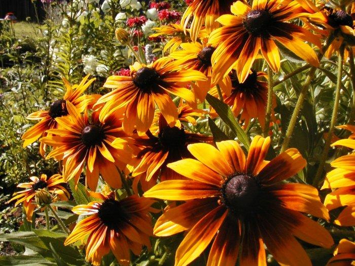 Hummingbird Bulk Mix-Wildflower Blend-5,000 Seeds/18 Varieties! Limited Supply
