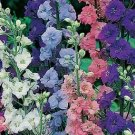 Rocket Larkspur Seeds-Giant Imperial Mix-Favorite Cut Flower!