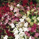 "Nicotiana ""Heirloom Mix"" Seeds **Highly Fragrant**"