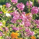 Fragrant Floral Collection **SEEDS** 6 Varieties