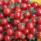 Sweet Pea Currant Organic Tomato Seeds Tiny Sweet Treat Kids Love Them