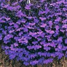 Lobelia Palace Seeds**Lilac** Containers*Baskets*Rock Gardens*Borders*SOLD OUT