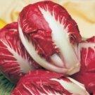 Radicchio Rouge De Verona Organic Seeds Red Italian Chickory