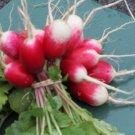 French Breakfast Radish Seeds**Organic**Heirloom**