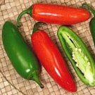 Jalapeno Hot Pepper Seeds **Organic**