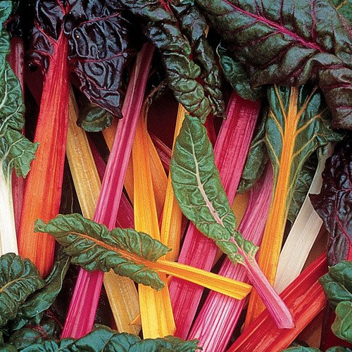 Swiss Chard Seeds**Bright Lights**EZ to Grow**SOLD OUT