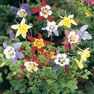Columbine Seeds **McKana Giant** Mix **Cottage Garden**Deer Resistant