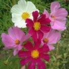 Hummingbird Bilk Mix-Wildflower Seed Blend-5,000 Seeds/18 Varieties!