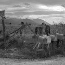 DOROTHEA LANG PHOTO MAILBOX HISTORIC DEPRESSION COUNTRY ROAD VINTAGE 1939 OLD