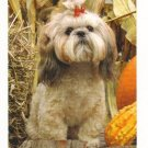 New Postcard,  Maltese in fall, Very Good Condition
