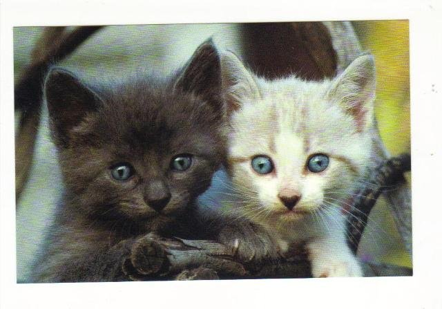 New Postcard,   Kittens, Very Good Condition