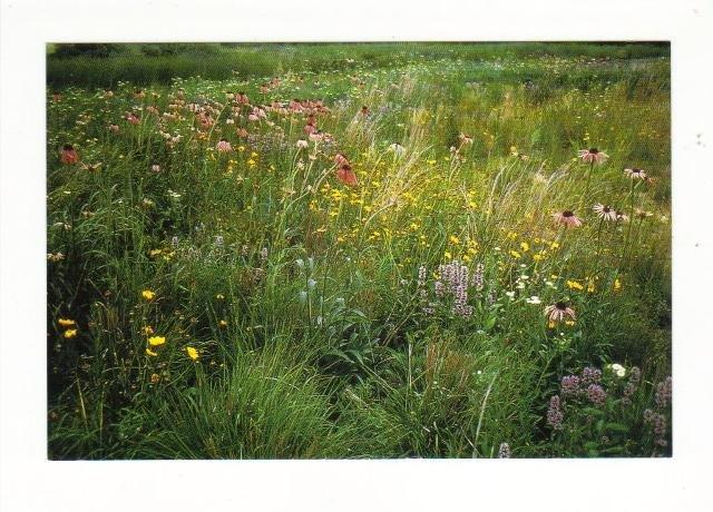 New Postcard, Schulenberg Prairie, Very Good Condition