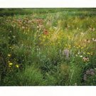 New Postcard, Schulenberg Prairie, Very Good Condition
