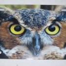 GREAT HORNED OWL LICENSE PLATE 6 X 12 NEW