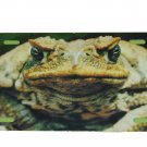 MAD FROG LICENSE PLATE ALUMINUM 6 X 12 NEW