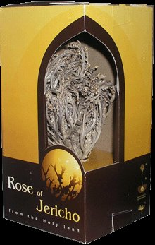 real rose of jericho
