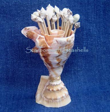Lambis Shell Toothpick Holder with Toothpicks