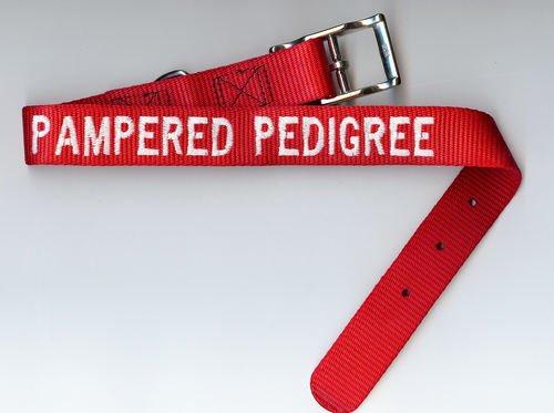 NEW Pampered Pedigree Dog Pet Leash Collar  Medium/Large