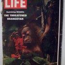 Life Magazine The Threatened  Orangutan  March 28, 1969