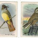 Arm and Hammer Cards Tenth Series Useful Birds of America