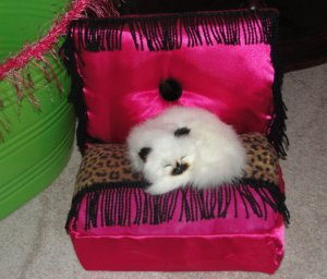 Teensie Tiddlie Winks, ***FREE SHIPPING!*** Pet Bed, Dog / Cat Bed