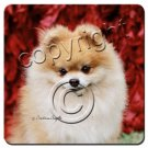 Pomeranian, Red Coasters