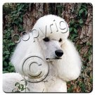 Poodle, White, Sport cut Coasters