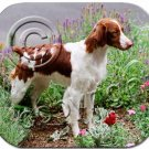 Brittany, Brown & White Mouse Pad