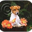 Jack Russell Terrier, Brown & White, Smooth Coat Mouse Pad