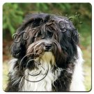 BAC130B Havanese, Black & White Coasters