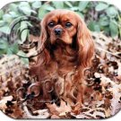BAMP80D Cavalier King Charles, Ruby Mouse Pad