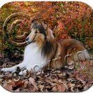 BAMP23A Collie, Sable Mouse Pad