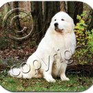 BAMP75 Great Pyrenees Mouse Pad