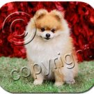 BAMP03A Pomeranian, Red Mouse Pad