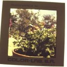 CAPTAIN & TONI TENNILLE Original Color TRANSPARENCY Slide One of a Kind  BUSHES