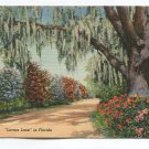 Lovers Lane in Florida Postcard