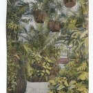 Under the Palms in the Conservatory Jackson Park Chicago Illinois Postcard