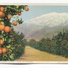 A California Anomaly Snow and Oranges Postcard