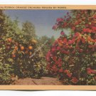 A California Orange Orchard Fenced by Roses Postcard
